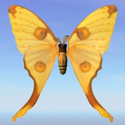 lightwave moth argema