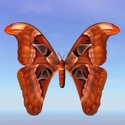 lightwave moth bhutntis