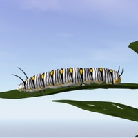 monarch caterpillar 3d model