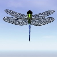 Dragonfly.obj.zip