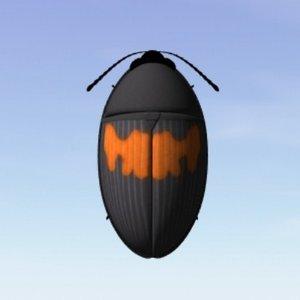 3d lwo darkling beetle