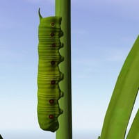 hawkmouth caterpillar 3d model