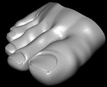 human toes 3d model