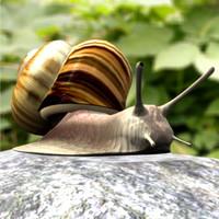 PF_Snail_dxf.zip