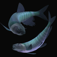3d 3ds opsariichthys hasu