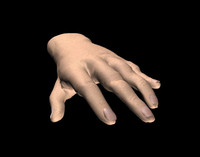 3d model hand jointed