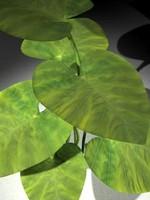 plant01_c4D.zip