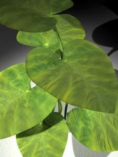 3d ornamental plant model