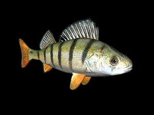 fish 3d 3ds