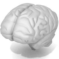 female brain max