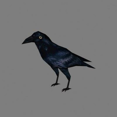 3d crow bird
