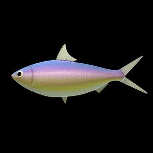 sardine fish c4d