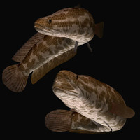 northern snakehead 3d model