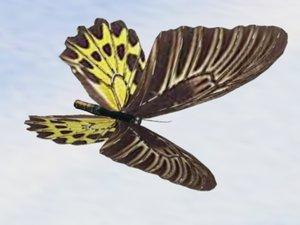 3d birdwing butterfly flap wings model