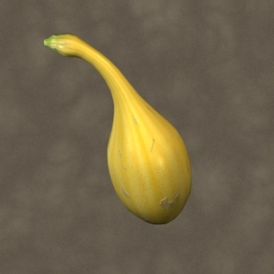 3ds max yellow crookneck squash zipped