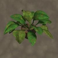 sickley plant zipped 3d model