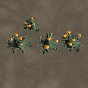 california poppies flowers zipped ma