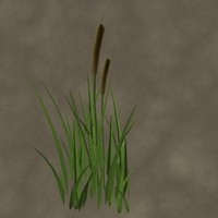 3d cattails zipped model