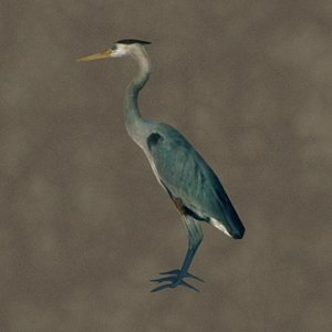 3d model blue heron zipped
