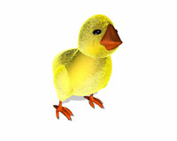 cute chicken 3d model