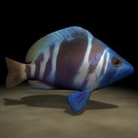fish5.zip