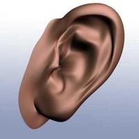 ears 3d model