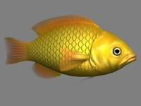 fish goldfish 3d model