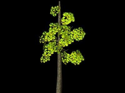 3d 3ds tree