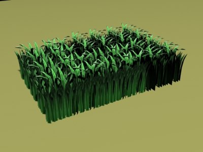 grass patch type max