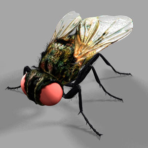 fly insect 3d model