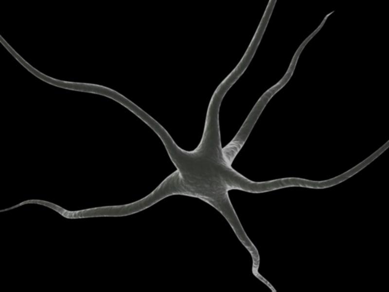 3dsmax nerve