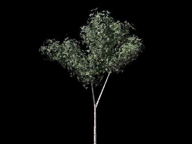 free birch tree 3d model
