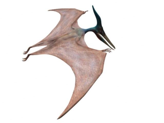 pteranodon ingens 3d model