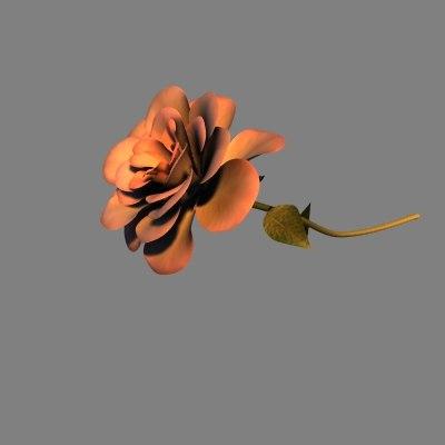 rose cob
