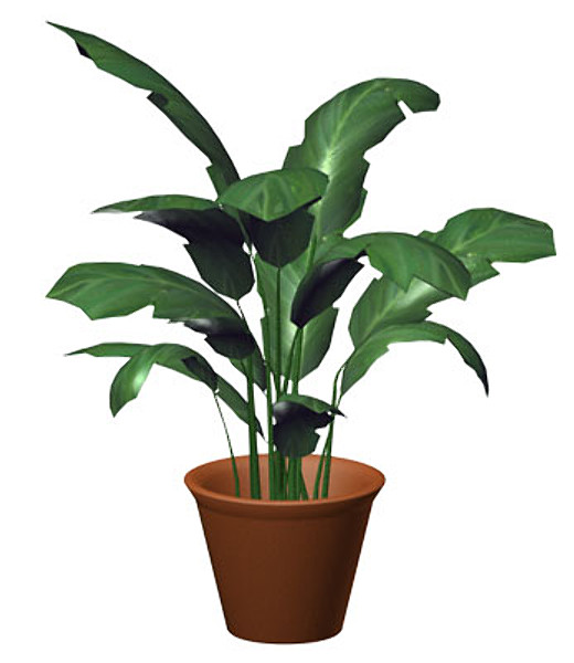 Houseplant.zip