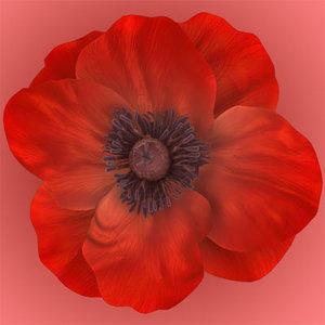 poppy flowers ma