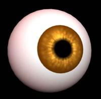 free eye 3d model