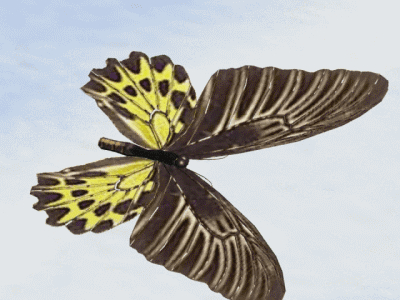 bird wing butterfly flapping 3d model
