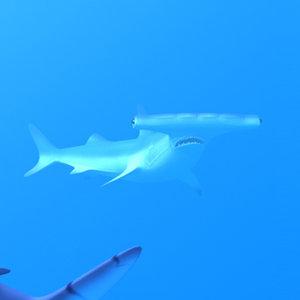lwo hammerhead shark