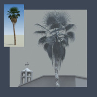 palm_tree_beautiful.zip