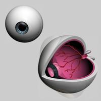 eyes eyeball 3d model