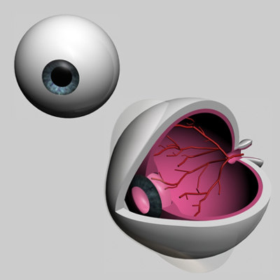 eyes eyeball 3d model