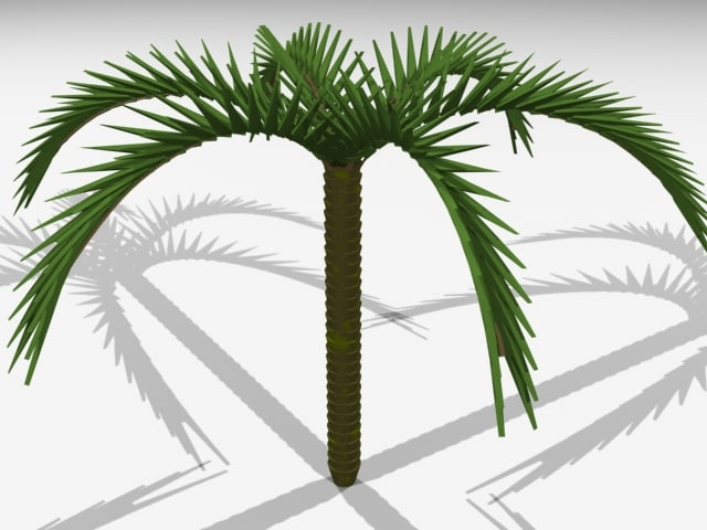 max photorealistic palm