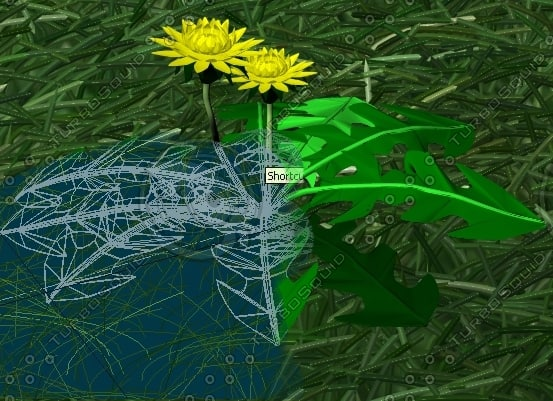 dandelion animation 3ds