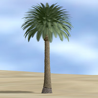 DatePalm_c4d