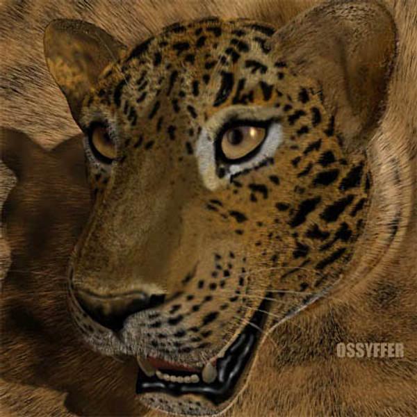 Leopard head.zip