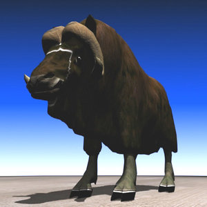 free muskox beast northern 3d model