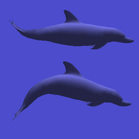 3d model of swimming dolphin kick