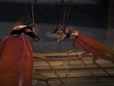cockroach crunch 3d model