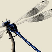 3ds max dragonfly damselfly segments